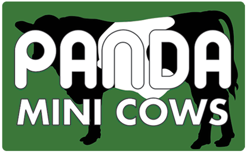 Panda Mini Cows